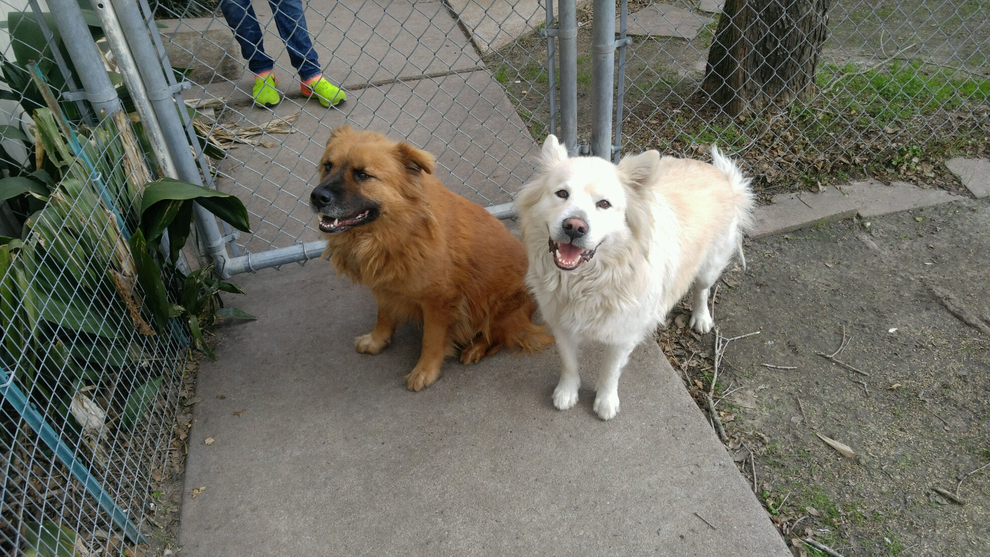 ″Baxter″ and ″Buddy″ - Email: forgottenpetadvocates@yahoo.com