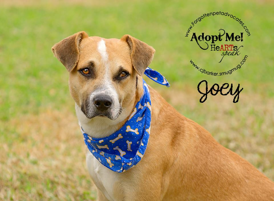 """Joey"" ADOPTED 1-8-2016"