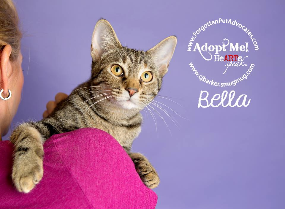 """Bella"" ADOPTED 1-23-2016"
