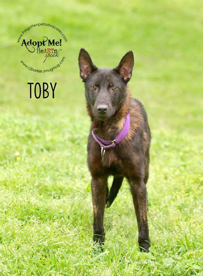 """Toby"" went into rescue 1-30-2016"