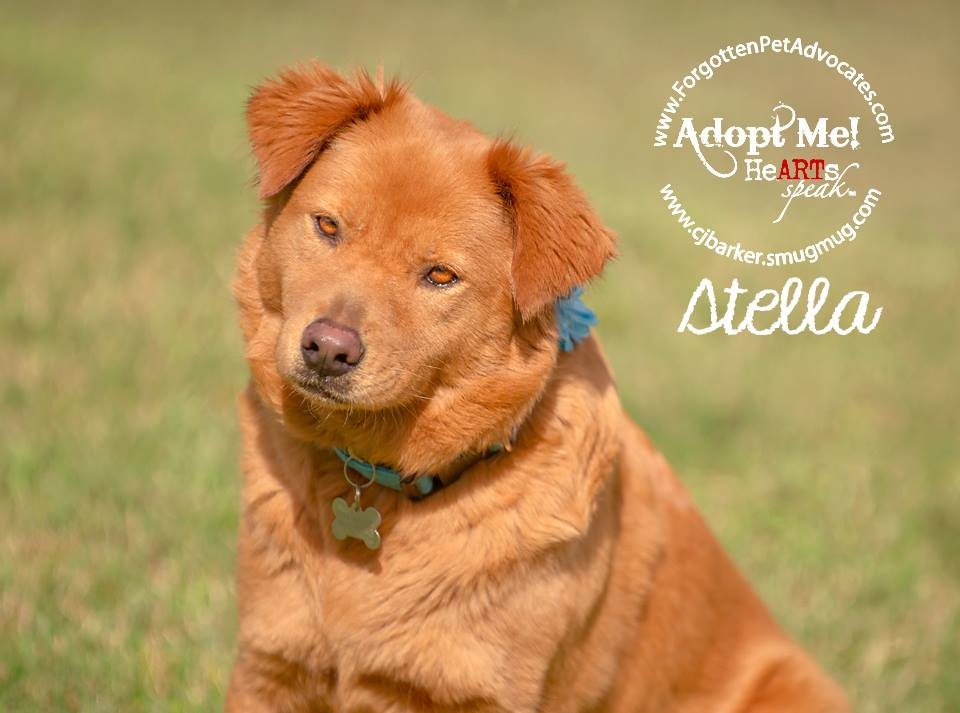 """Stella"" ADOPTED 1-31-2016"