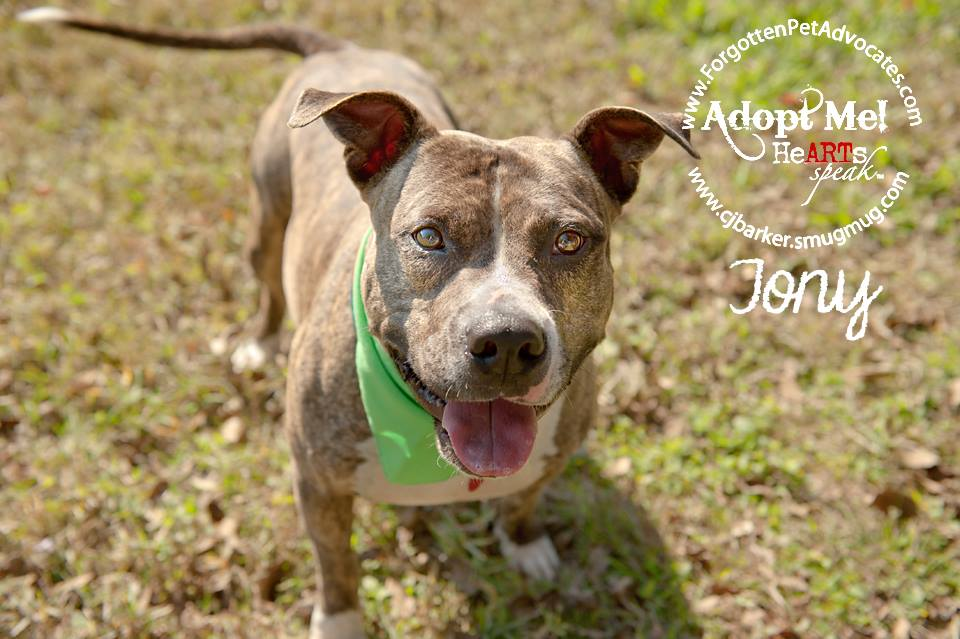 """Tony"" ADOPTED 2-14-2016"