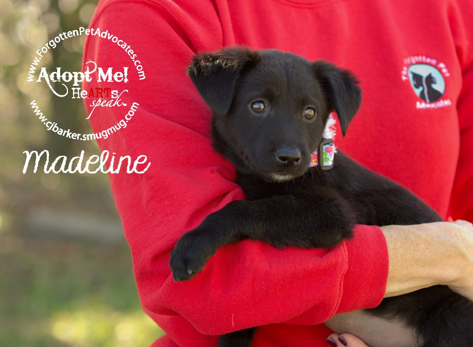 """Madeline"" ADOPTED 2-27-2016"