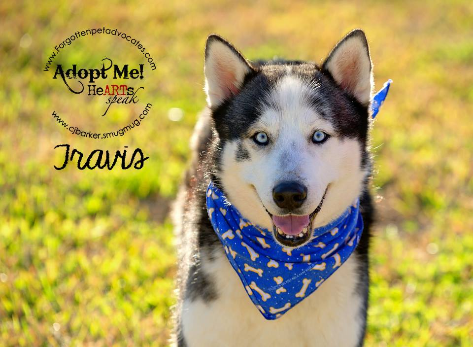 """Travis"" ADOPTED 4-23-2016"