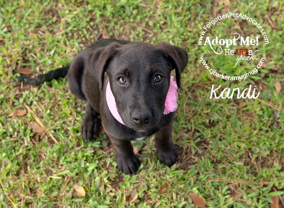 """Kandi"" ADOPTED 1-7-2016"