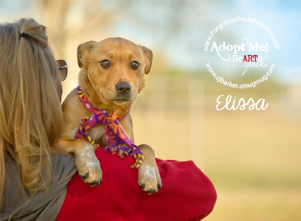 """Elissa"" ADOPTED 2-4-2016"