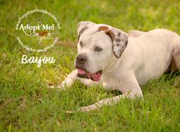 """""""Bayou"""" ADOPTED 2-8-2016"""