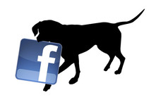Follow ″The Forgotten Pet Advocates″ on Facebook !
