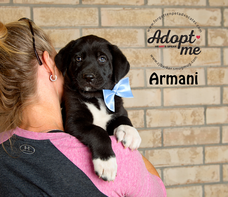 """Armani"" ADOPTED TOGETHER with Sister ""Amora"" 4-13-2017"