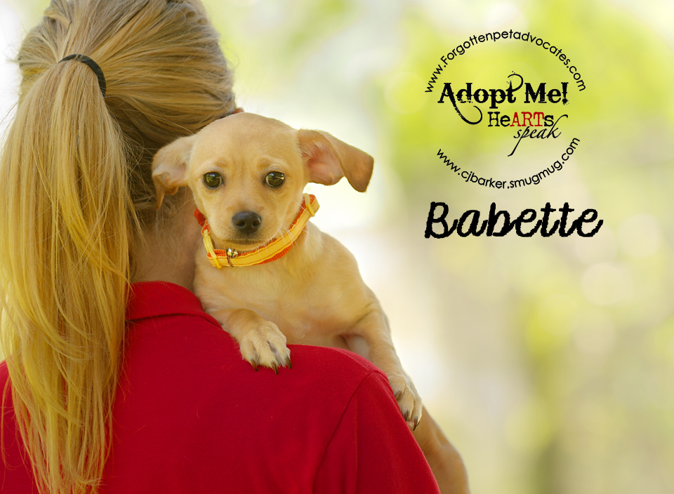 """Babette"" ADOPTED 4-24-2016"