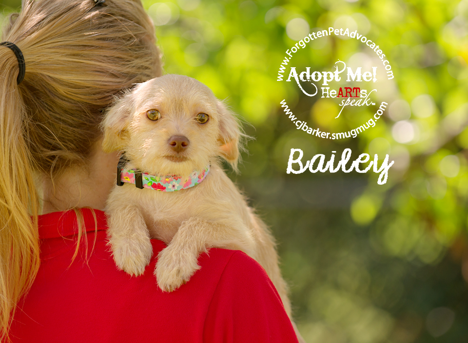 """Bailey"" ADOPTED 4-17-2016"