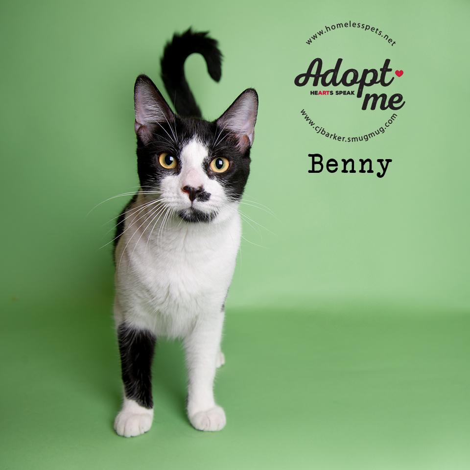 ″Benny″ - Email: forgottenpetadvocates@yahoo.com