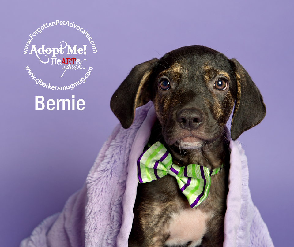 """Bernie"" 8-5-2016 went to an FPA Rescue Partner"