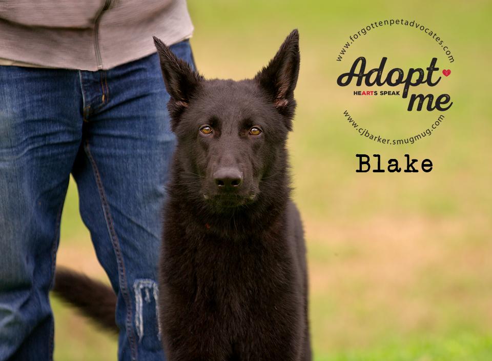 ″Blake″ - Email: forgottenpetadvocates@yahoo.com