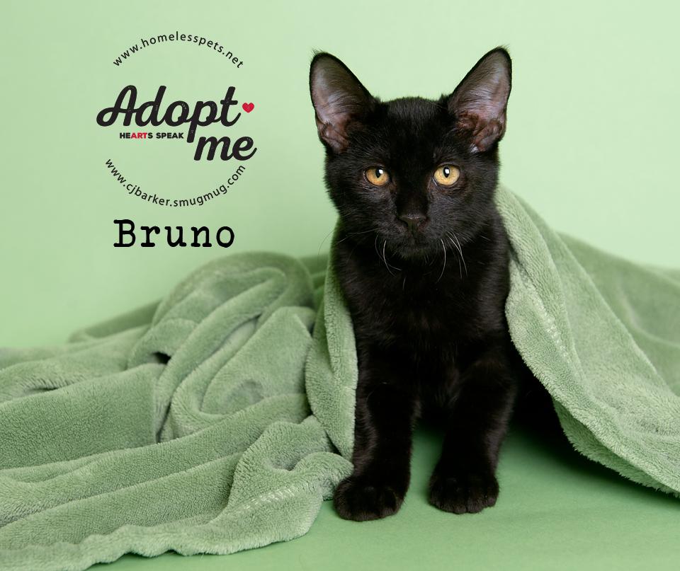 ″Bruno″ - Email: forgottenpetadvocates@yahoo.com