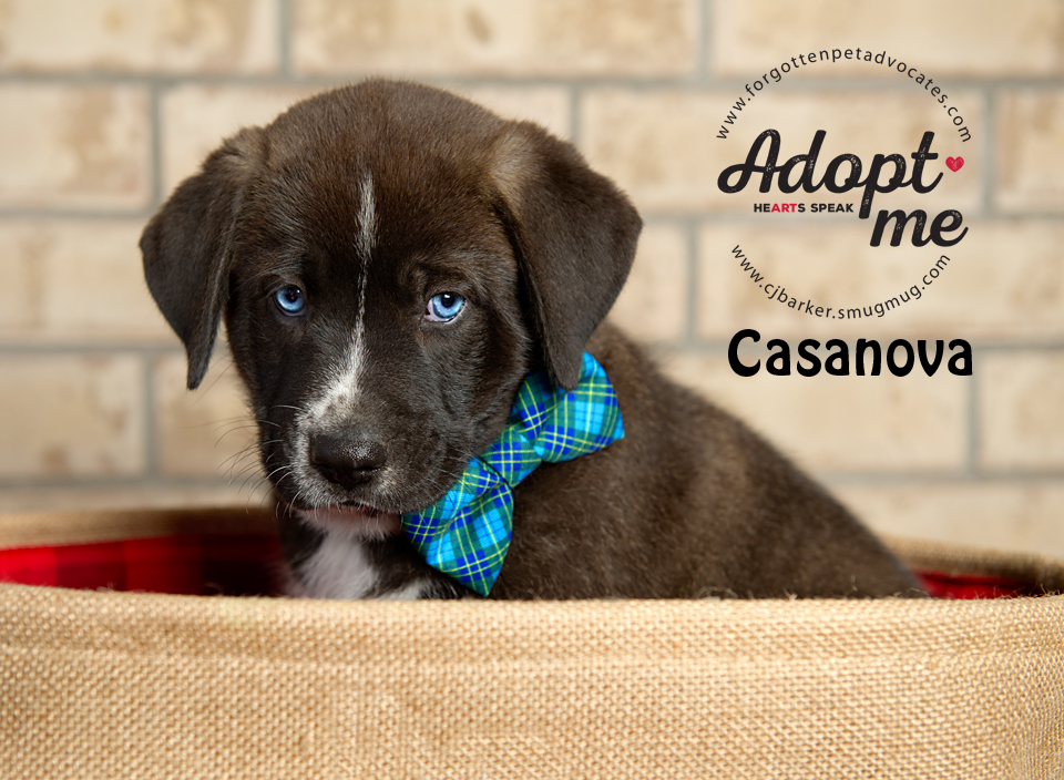 """Casanova"" ADOPTED TOGETHER with Sister ""Rosie"" 4-13-2017"