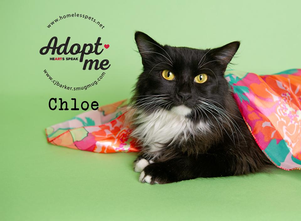 ″Chloe″ - Email: forgottenpetadvocates@yahoo.com