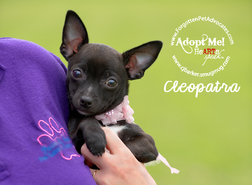 """Cleopatra"" ADOPTED 5-6-2016"