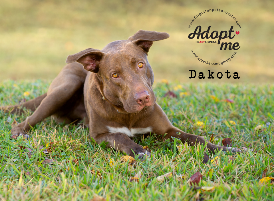 ″Dakota″