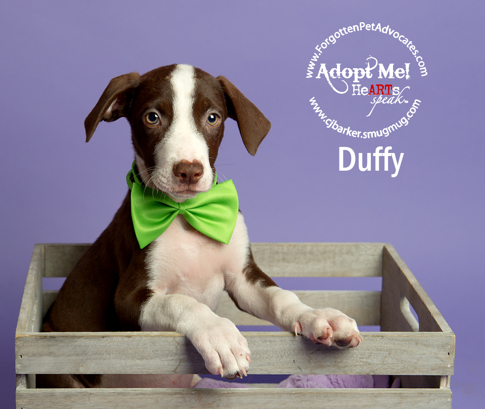 """Duffy"" 8-5-2016 went to an FPA Rescue Partner"