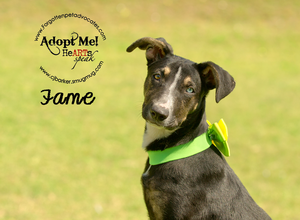 """Fame"" ADOPTED 4-24-2016"