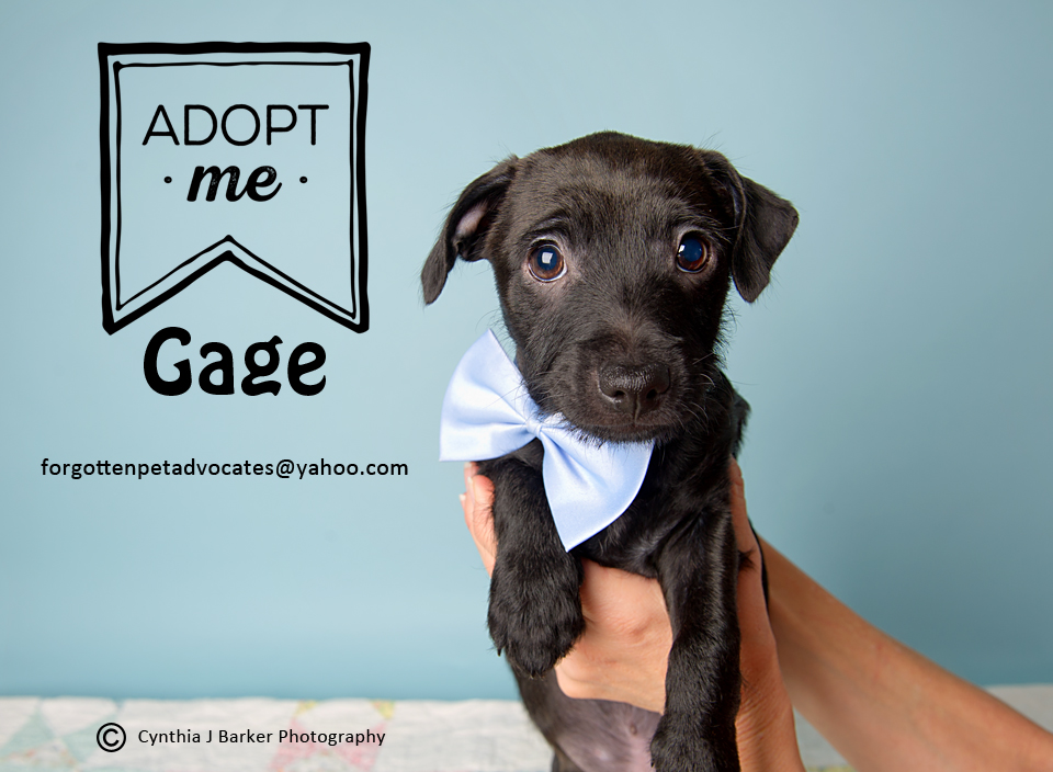 """Gage"" ADOPTED 4-3-2017"