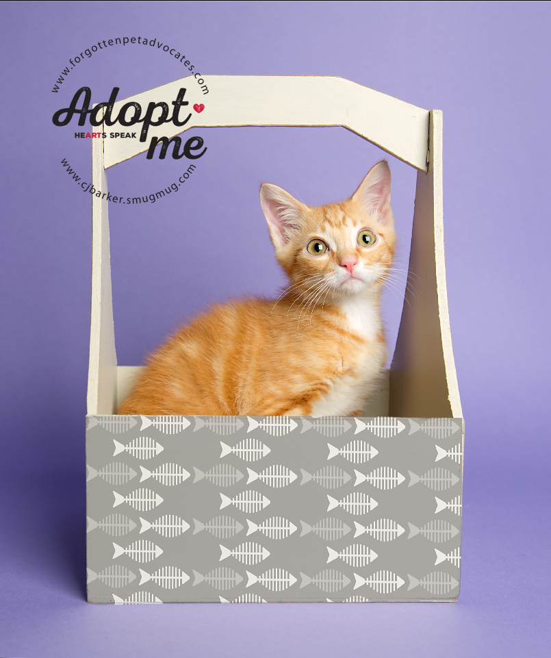 """""""Garfield"""" ADOPTED TOGETHER with """"Tiger"""" 8-19-2017"""