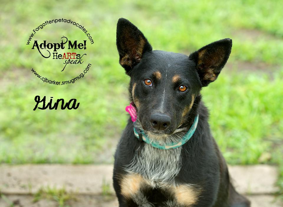 """""""Gina"""" ADOPTED 7-28-2016"""