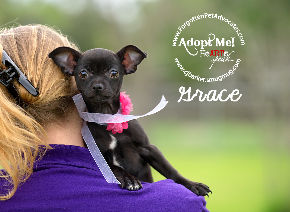 """Grace"" ADOPTED 4-23-2016"
