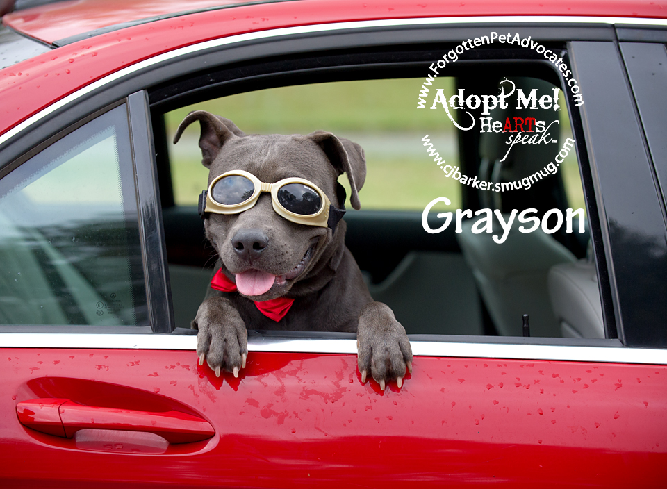 """Grayson"" ADOPTED 1-20-2017"