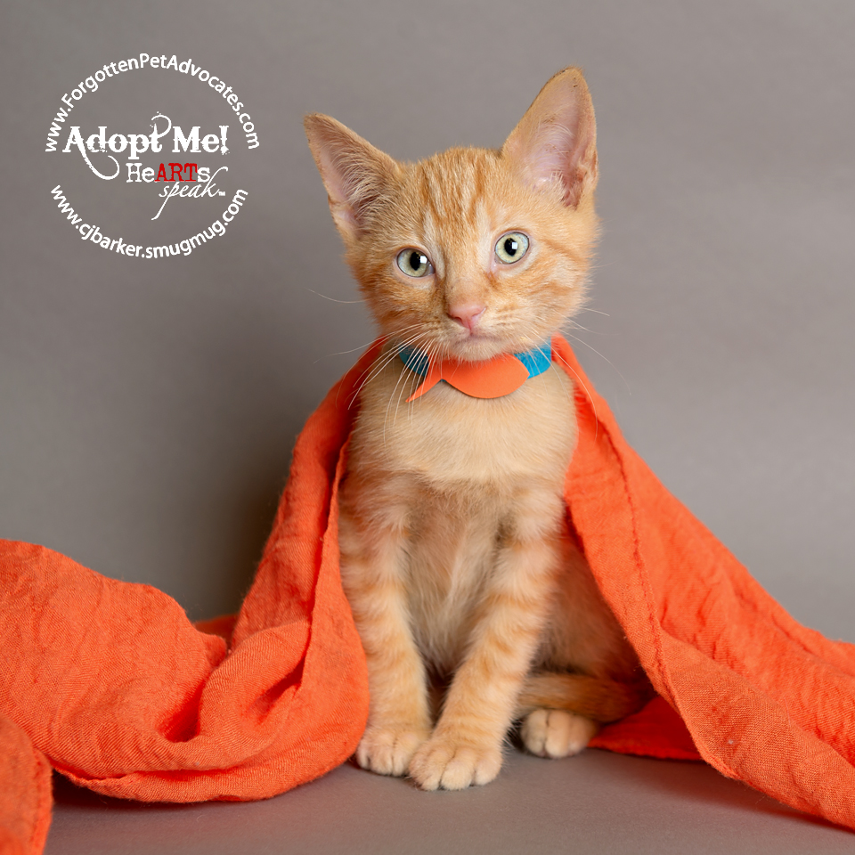 """""""Joey"""" ADOPTED with """"Tabitha"""" 10-3-2017"""