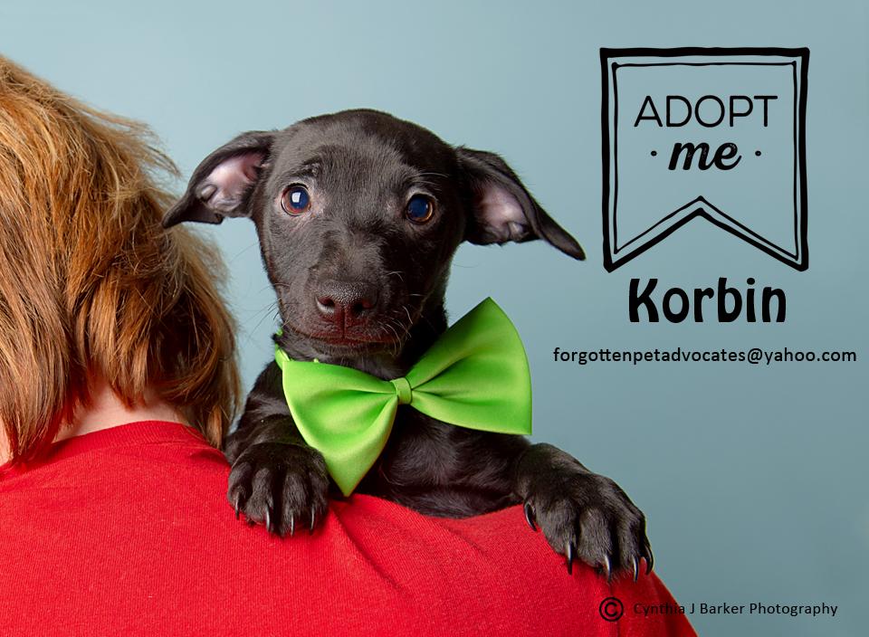 PUPPY ″Korbin″ - Email: forgottenpetadvocates@yahoo.com