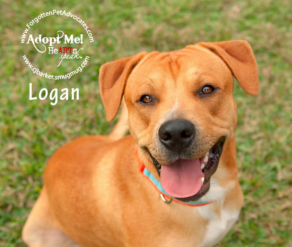 """""""Logan"""" ADOPTED 12-24-2016"""