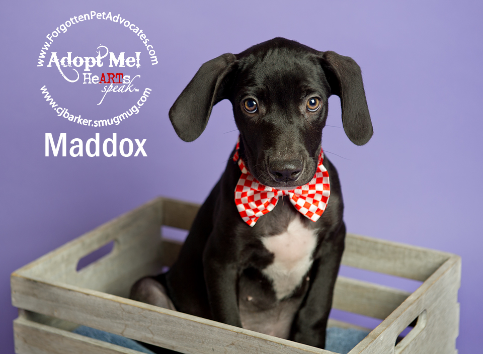 """Maddox"" 8-5-2016 went to an FPA Rescue Partner"