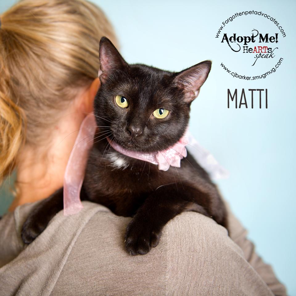 """Matti"" ADOPTED 7-9-2016"