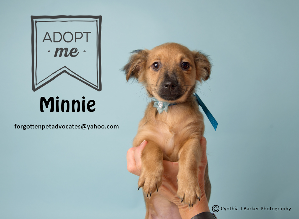 """Minnie"" ADOPTED 3-19-2017"