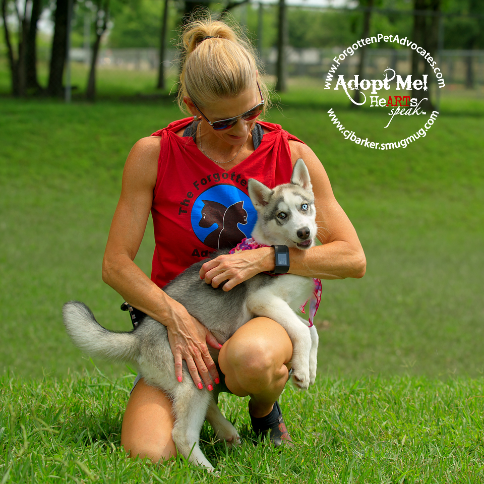 """Sierra"" went to Texas Sled Dog Rescue !"