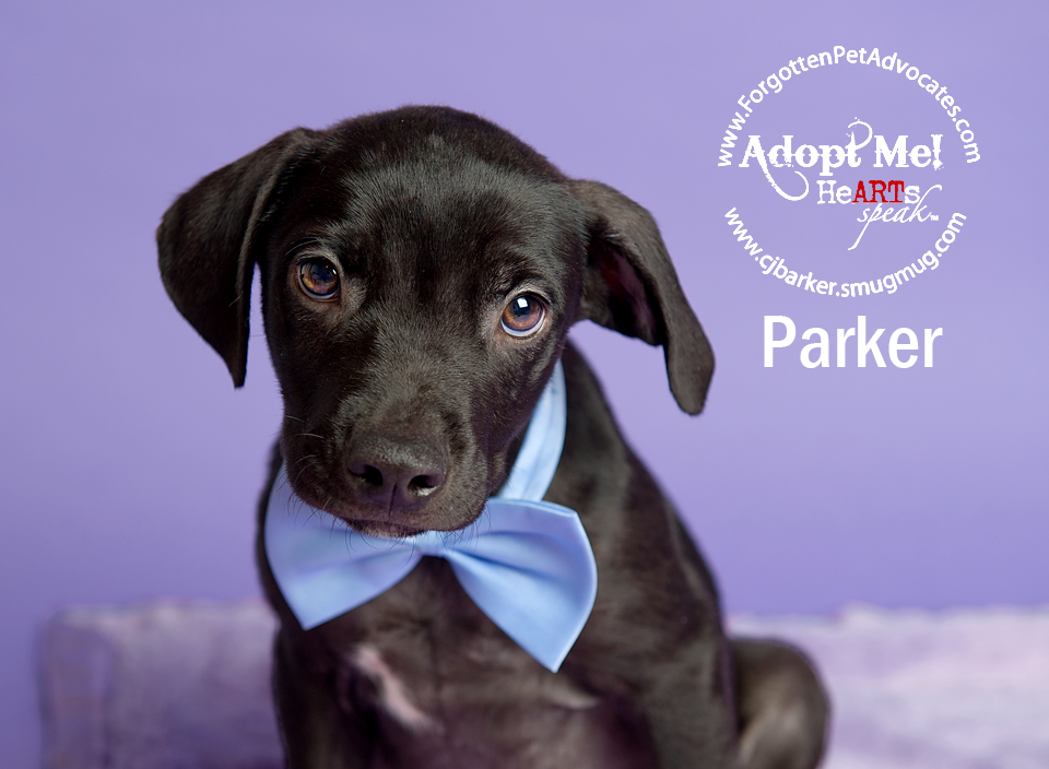 """Parker"" 8-5-2016 went to an FPA Rescue Partner"