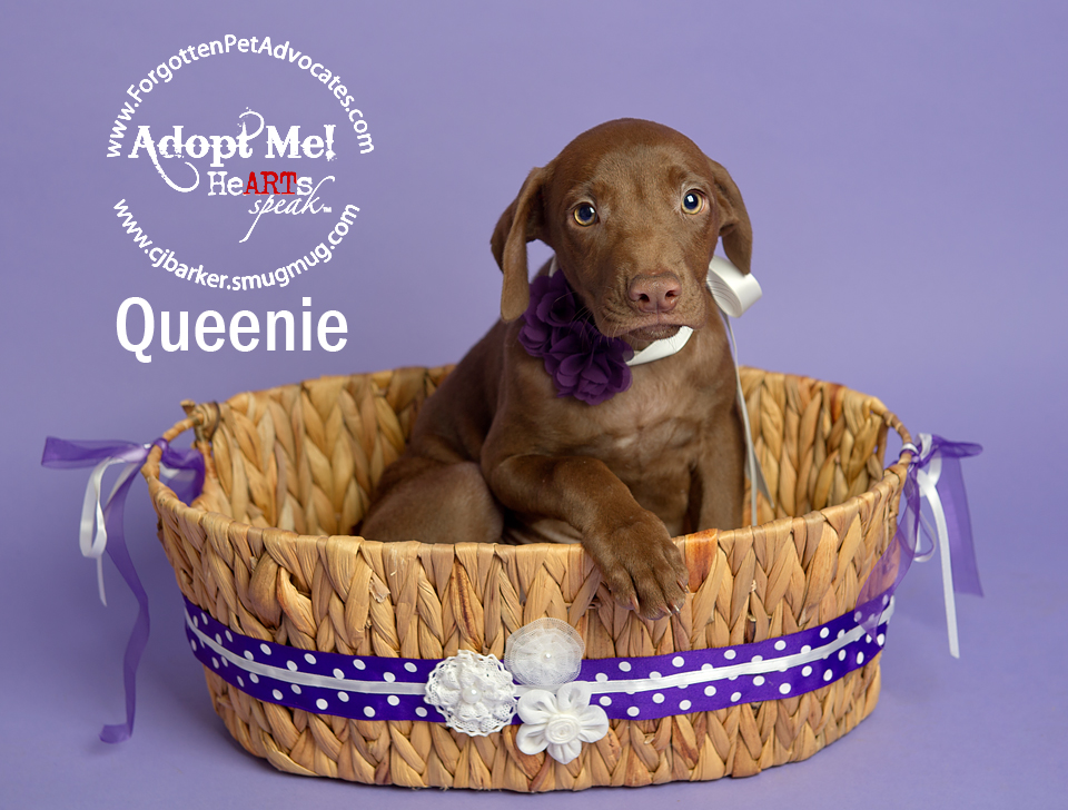 """Queenie"" ADOPTED 8-13-2016 w/ her brother ""Jet"""
