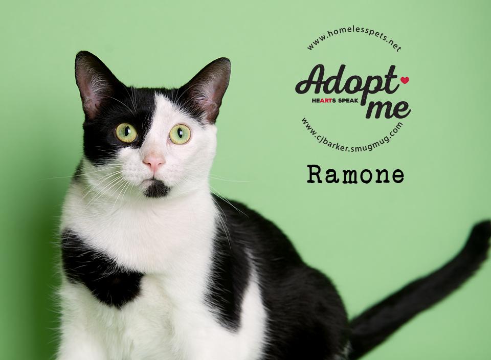 ″Ramone″ - Email: forgottenpetadvocates@yahoo.com