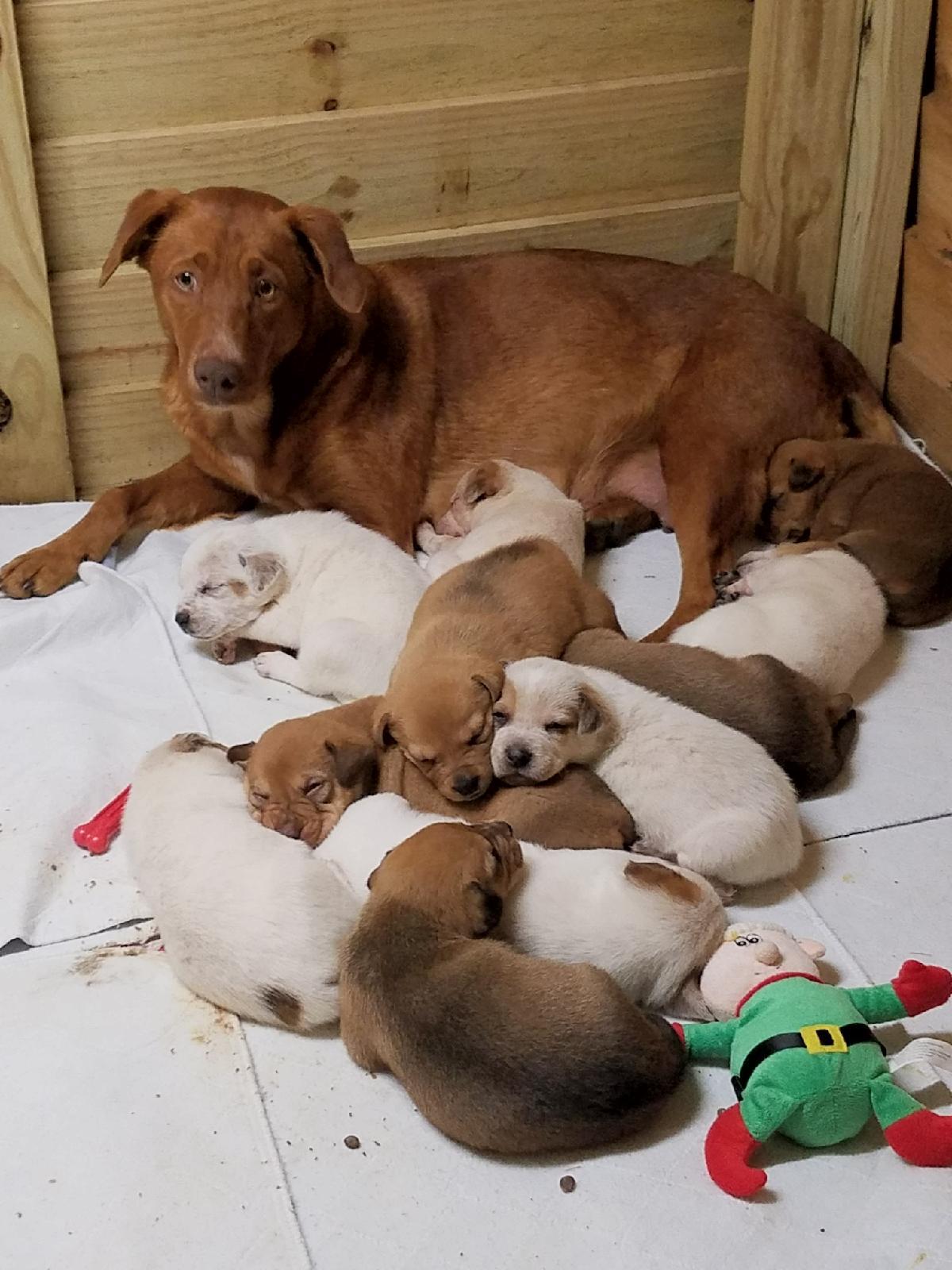 ″Noel″ and her Babies !