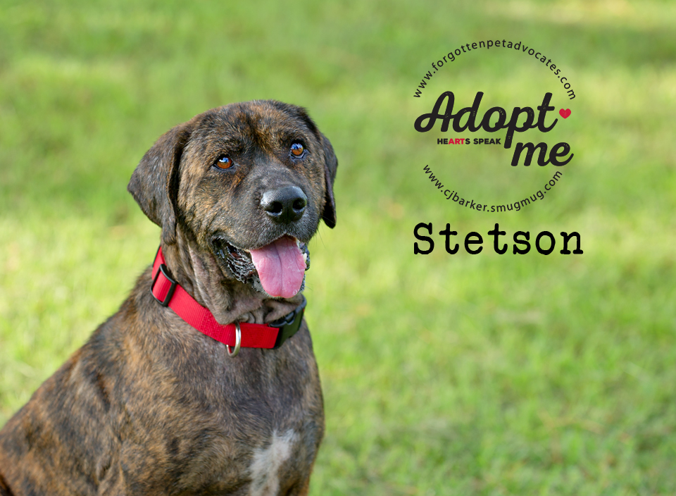 """""""Stetson"""" ADOPTED 7-8-2017"""