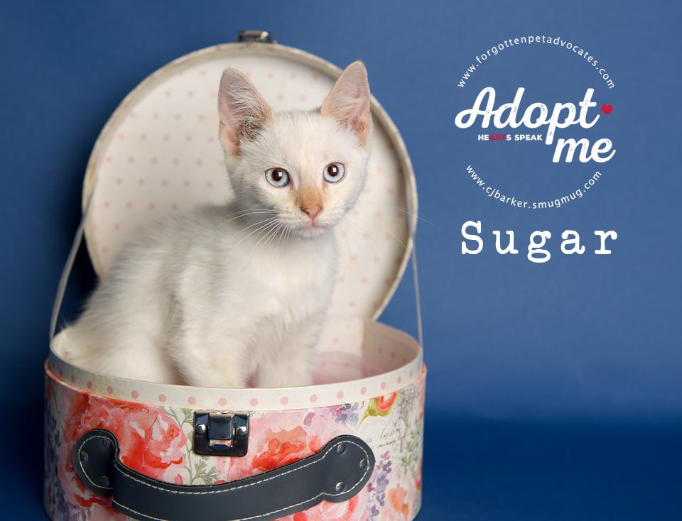 KITTEN ″Sugar″ - Email: forgottenpetadvocates@yahoo.com