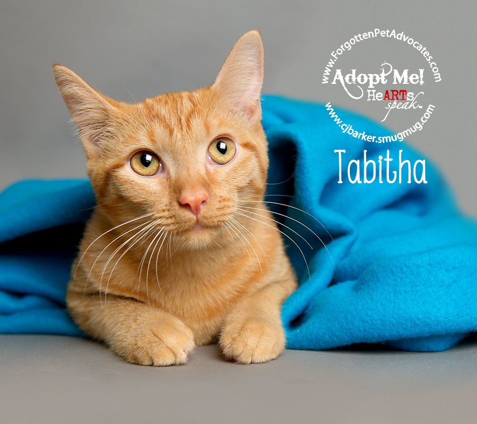 """""""Tabitha"""" ADOPTED with """"Joey"""" 10-3-2017"""