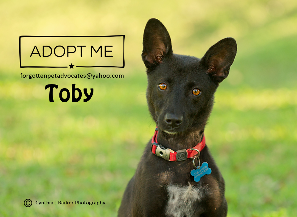 """""""Toby"""" ADOPTED 7-19-2017"""