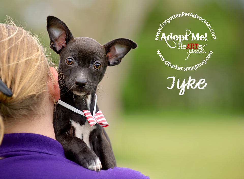 """Tyke"" ADOPTED 4-2016"