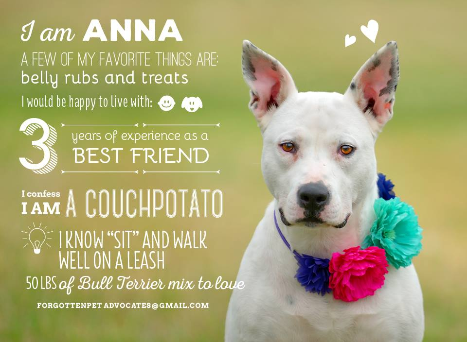 """""""Anna"""" ADOPTED 6-1-2016"""