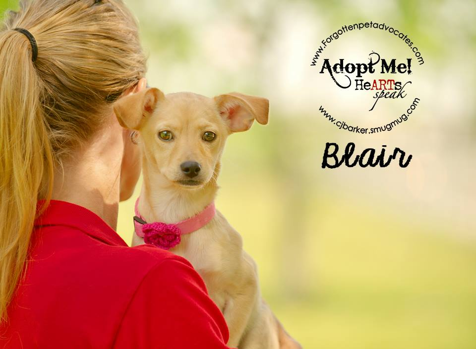 """Blair"" ADOPTED 8-13-2016"
