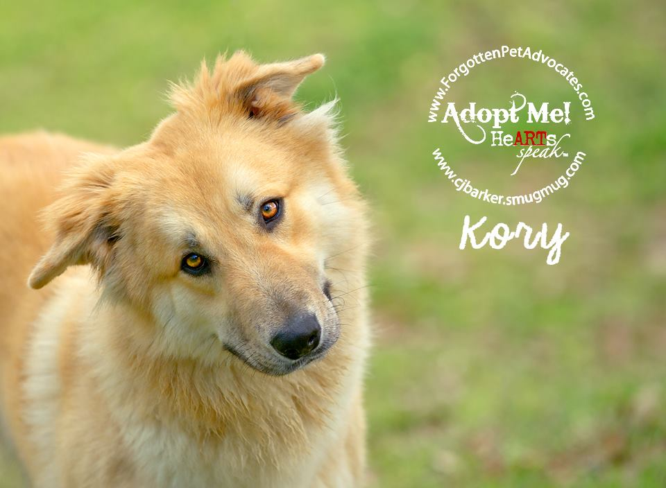 """Kory"" ADOPTED 3-18-2016"