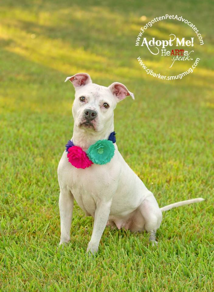 """Sophie"" ADOPTED 7-14-2016"